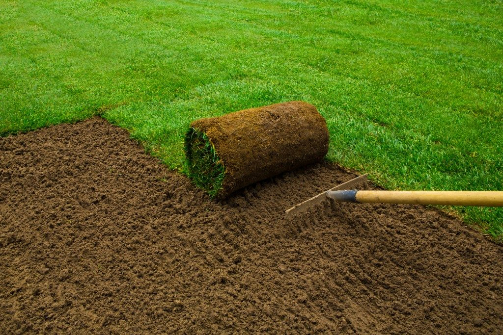 Gardener applying turf rolls in the backyard